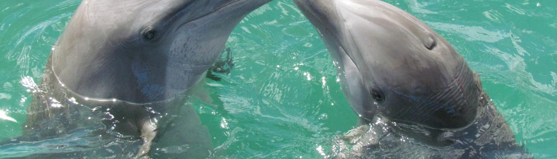 dolphin-1974975